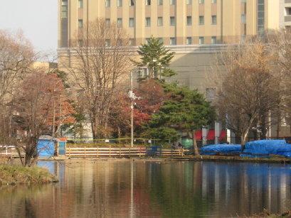 中島公園 菖蒲池