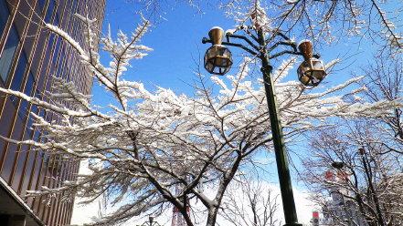 冬の街路樹と街路灯