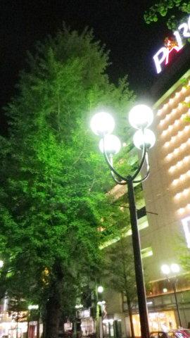 街路樹夜景