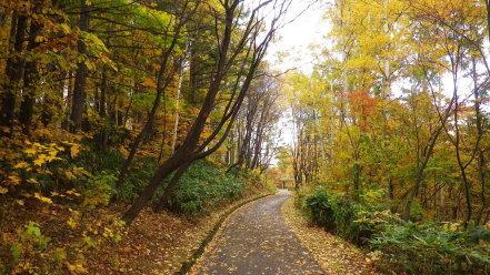 紅葉時期の旭山記念公園