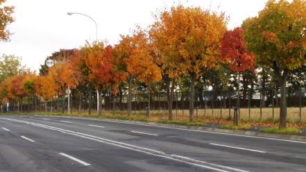北野通の紅葉