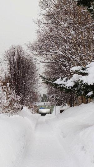 冬の白石サイクリングロード
