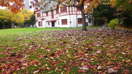 ほうの木の落ち葉