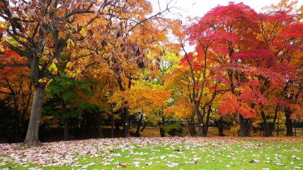 知事公館の庭
