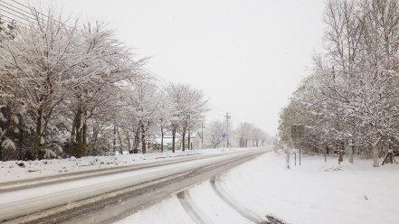 国道337号線 雪景色