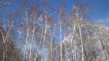 冬の旭山記念公園散策路