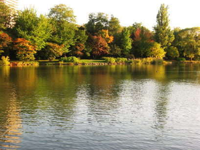 中島公園菖蒲池