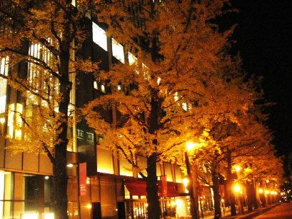 道庁前のイチョウ並木