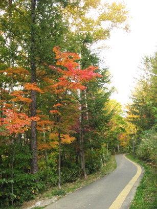 旭山記念公園の紅葉具合