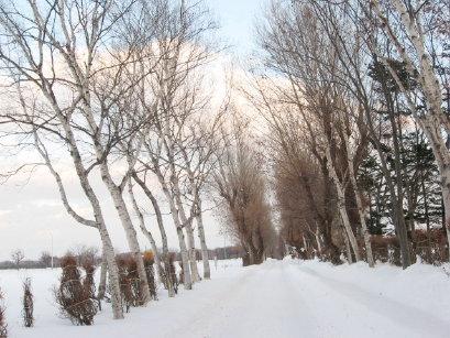 冬の八紘学園