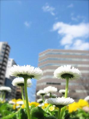 大通公園花壇の花