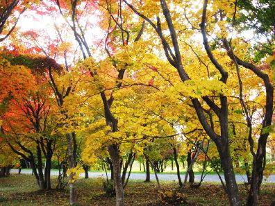 真駒内公園の紅葉