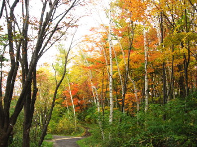 旭山記念公園の紅葉