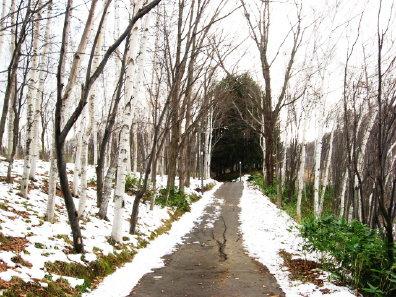 旭山記念公園散策路