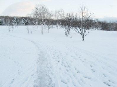 初冬の真駒内公園