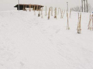 旭山記念公園展望台