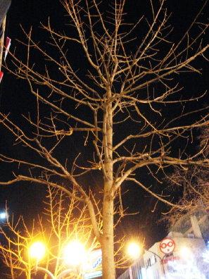 冬の夜の街路樹